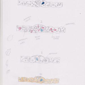 Organic ring  designs